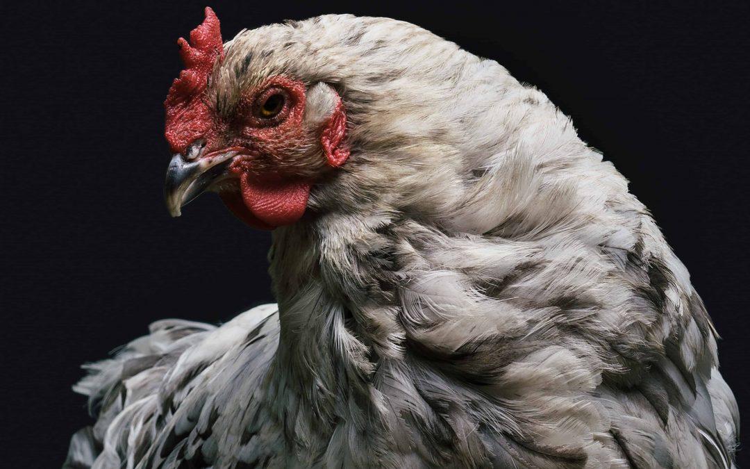 Wenn ich eingeladen bin, bringe ich kein Huhn mit!