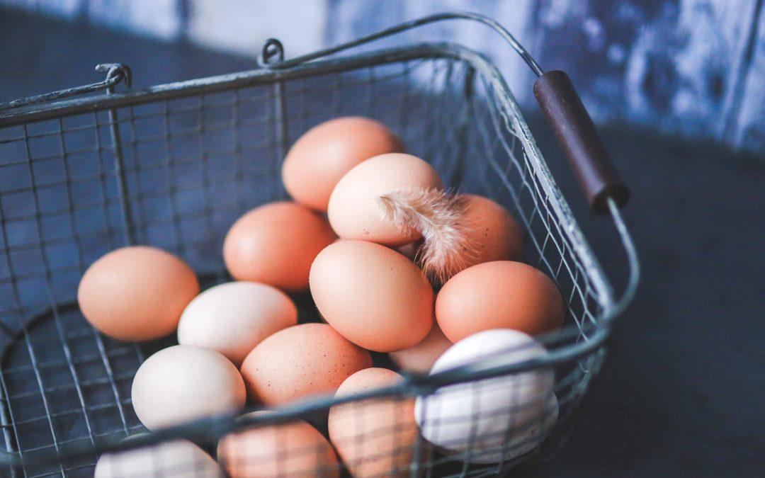Bio-Eier, Freilandeier, Bodenhaltung – welche Eier soll ich kaufen?